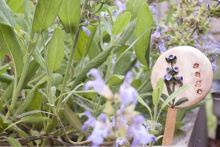 Sage Plant Marker in Garden